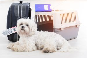 15 Regeln für die Flugreise mit Hund