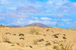 Here are 10 tropical places to explore in Cape Verde