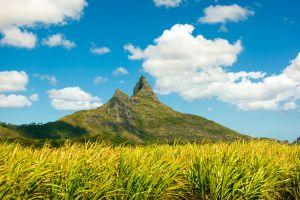 L'île Maurice utilise la canne à sucre pour produire de l'énergie renouvelable