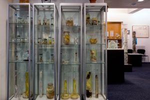 """Cinque assurdi musei che cambieranno la vostra idea di """"esposizione""""!"""