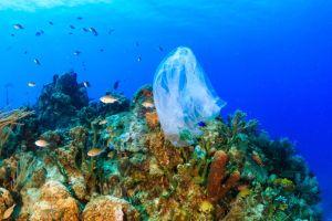 The Ocean Clean Up: la bonifica del Pacifico è in pausa