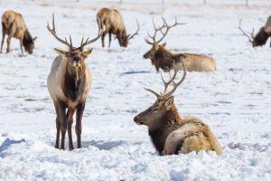 Descubriendo Montana, la puerta de acceso al Parque Nacional de Yellowstone
