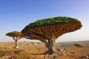Partez en terre inconnue sur l'île de Socotra