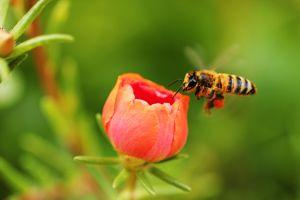 Les insectes en voie de disparition, une catastrophe pour la planète