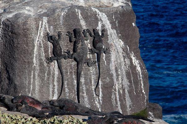 2. Tour the Galapagos Islands