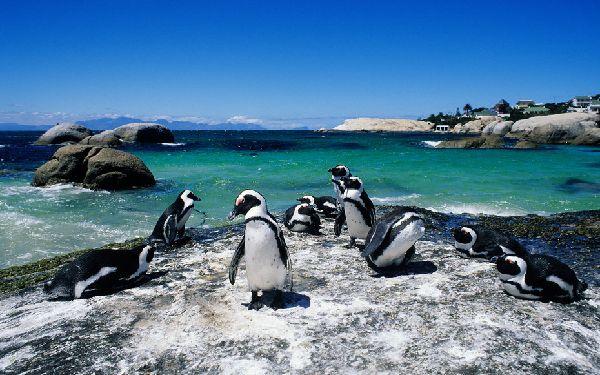 Boulders Beach, Afrique-du-Sud