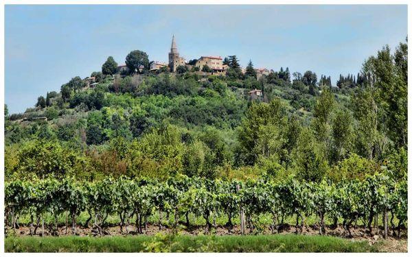 Its vineyards feed Croatia's budding wine culture