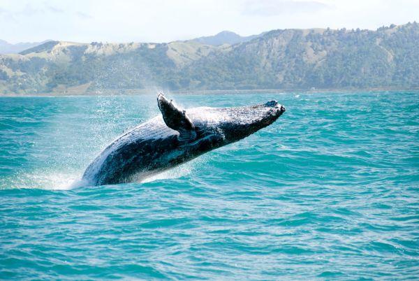 Chili : ils sauvent une baleine échouée et la ramènent dans l'océan
