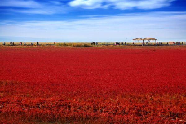 Panjin Red Beach: l'autunno rosso della Cina