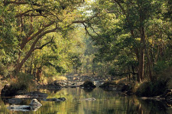 Die 10 schönsten tropischen Regenwälder der Welt