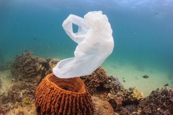 8th June: World Ocean Day