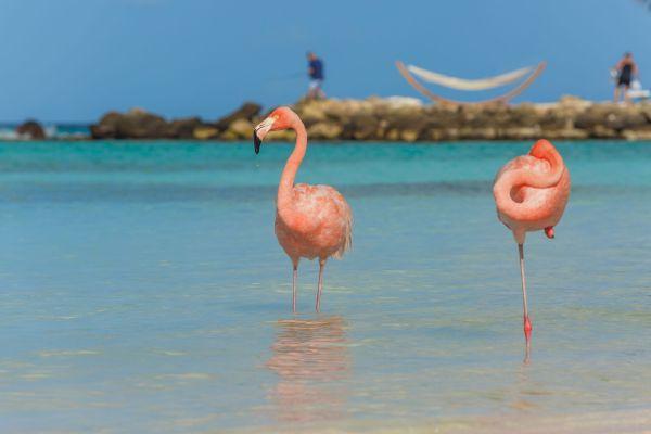 ¿Conoces la situación de estos flamencos en esta isla del Caribe?