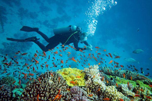 Indonesia: el misterio del pez que camina