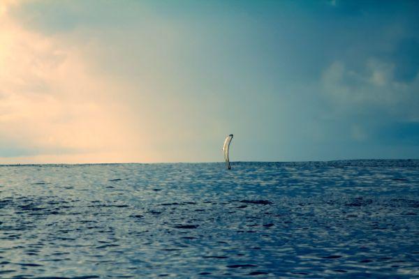 Le monde selon Wes Anderson