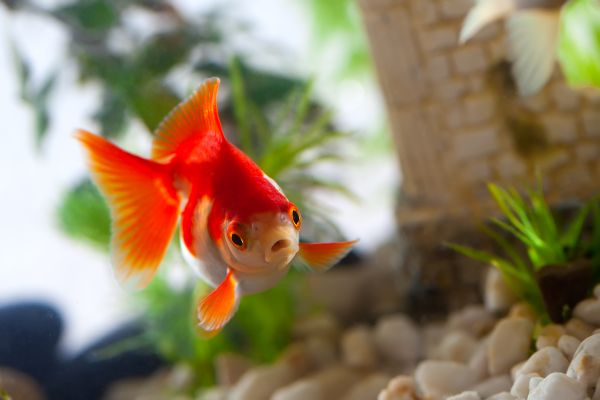 Fish become friends for lonely guests at Belgian hotel!