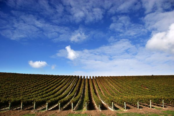 China's Extravagent Wine Theme Park