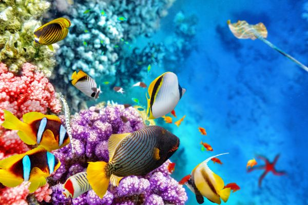 Call off the funeral - there's hope yet for the Great Barrier Reef