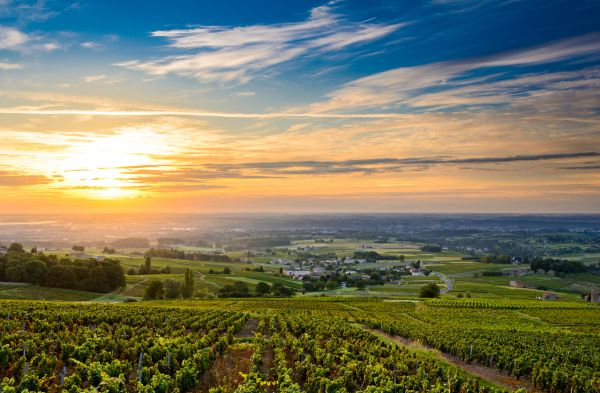 Another blow for France's winemaking industry