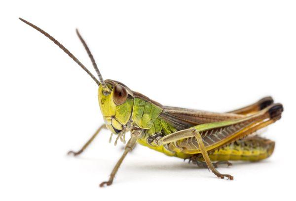 Finnlands erstes Insektenbrot