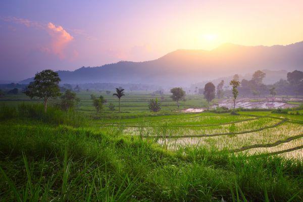 Bali acoge la escuela más ecológica del mundo