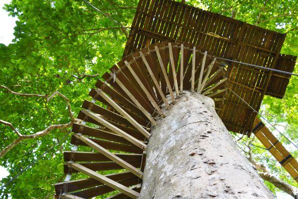 La regione Veneto riconosce le case sull'albero come strutture ricettive