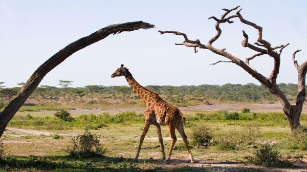 The Highlands en Tanzanie : cet hôtel vous rendra fou amoureux de la nature
