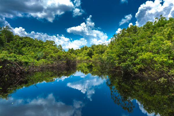 foresta sommersa Recanto ecologico Rio da Prata