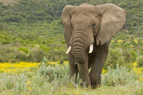 Trump approuve l'importation de trophées de chasse de lions et d'éléphants