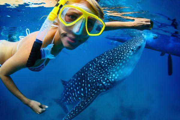 In Australia si nuota con gli squali balena