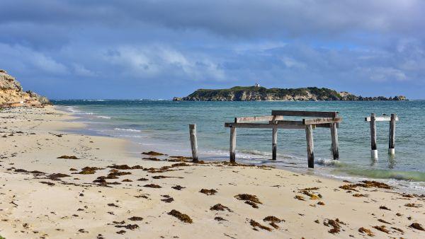Australia: trovati 150 delfini sulla baia di Hamelin, solo 15 salvi