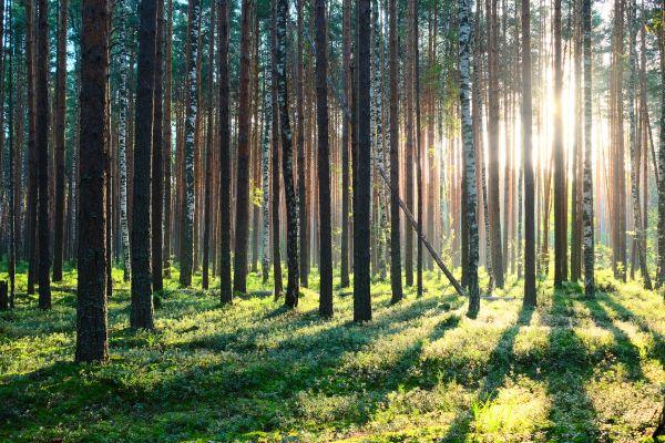 Picardie : comme un oiseau, roupillez dans une cabane dans un arbre
