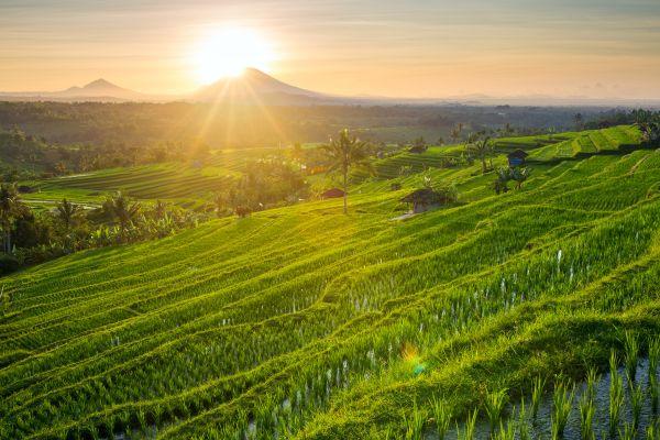 Les 20 plus belles rizières du monde