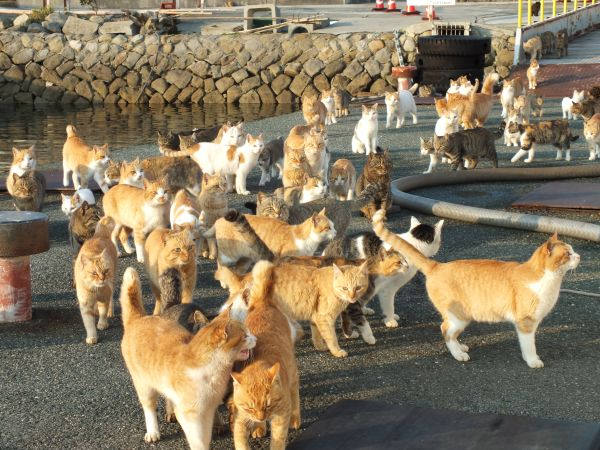 Welcome to the Island of Cats