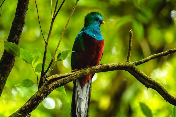 10 of the most beautiful birds in the world