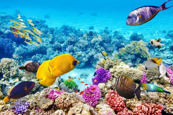 Egipto, un destino perfecto para practicar deportes acuáticos este verano