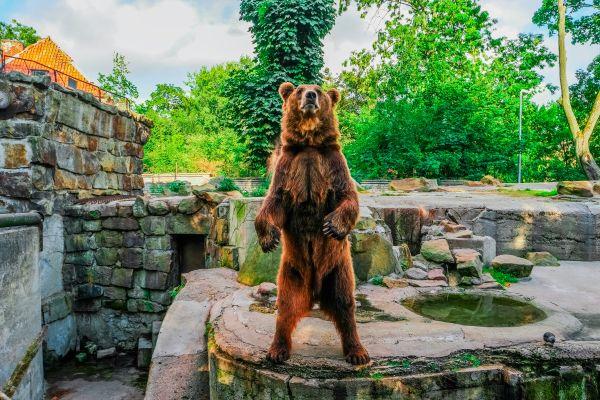 Les deux ours défendus par Rémi Gaillard vont être déplacés !