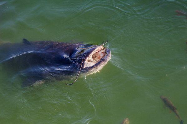 """Des baigneurs effrayés par une """" créature du lac """" dans la Creuse"""