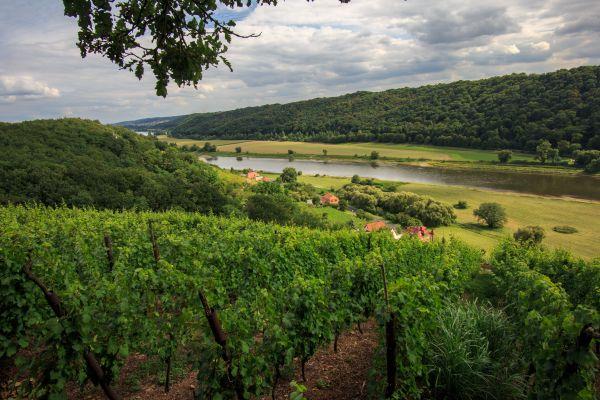 Una passeggiata in Sassonia; tra vino, porcellana e argento