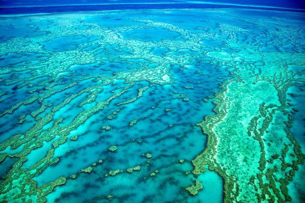 Robot pondeur et grande barrière de corail