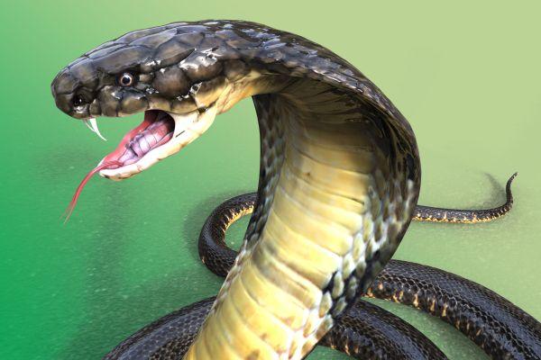 TOP 20 : Les serpents les plus agressifs du monde