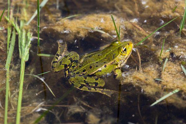 En Picardie, 94 espèces sont menacées !