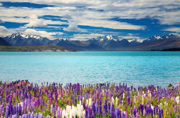Pour visiter la Nouvelle-Zélande, il faut promettre de préserver l'environnement