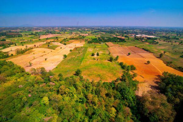 Pour sauver notre planète, contribuons à stopper la déforestation