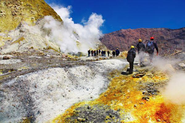Un pyrosome géant observé au large de la Nouvelle-Zélande