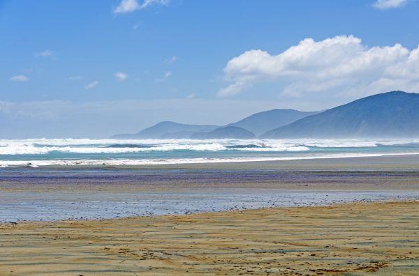 Spiaggiamento di gruppo in Nuova Zelanda: morti oltre 140 cetacei