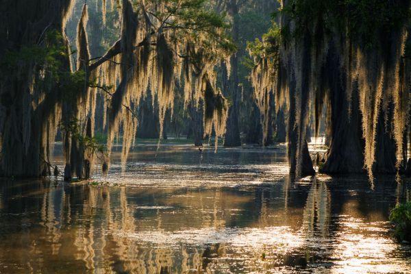 Pourquoi le bayou de Louisiane risque de disparaître