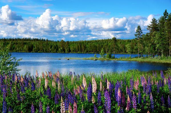 72 ore su un'isola deserta immersi nella natura: è il rimedio svedese contro lo stress