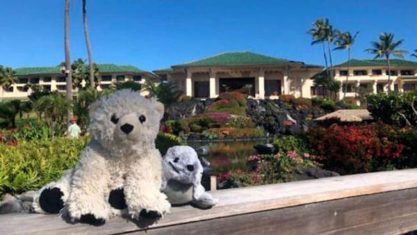 Une peluche oublié passe des vacances de rêve à Hawaï