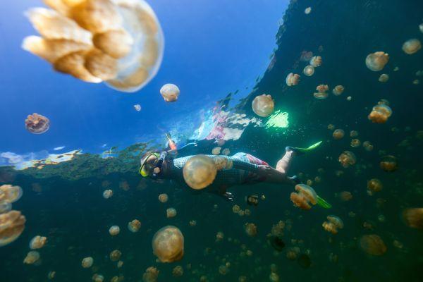 Nager au milieu des méduses en toute sécurité, c'est possible