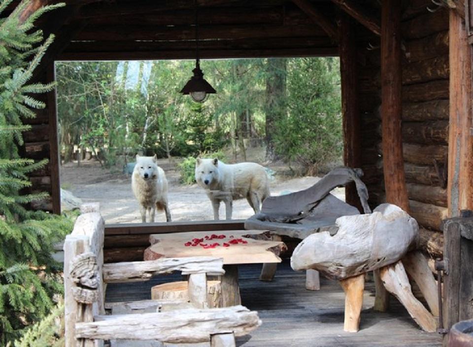 Dormir avec les tigres au zoo de la fl che easyvoyage for Chambre zoo de beauval